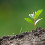 plant growth enhancer 2
